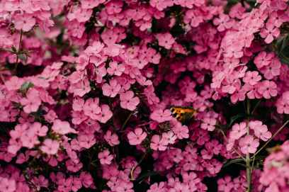 Photo by Irina Iriser on Pexels.com